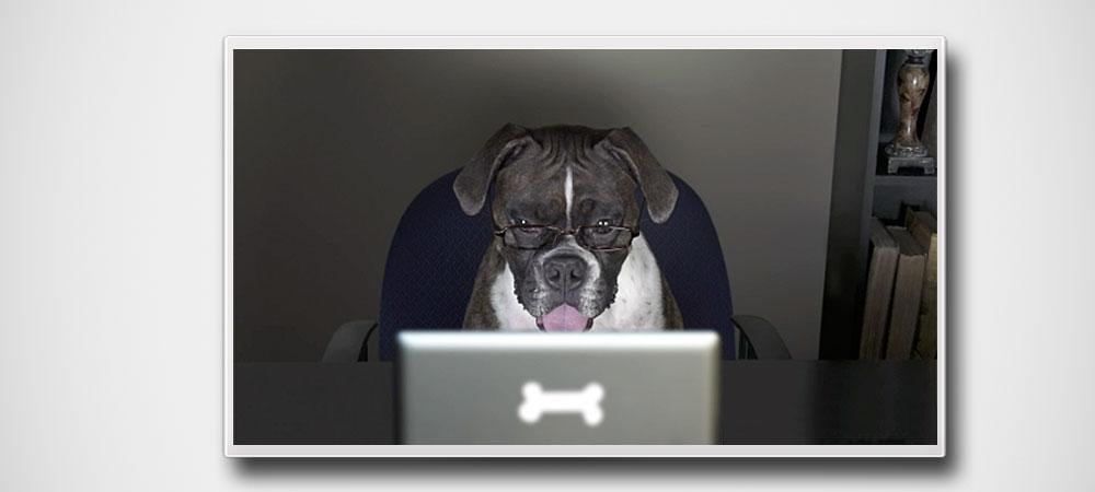 dog-n-bone